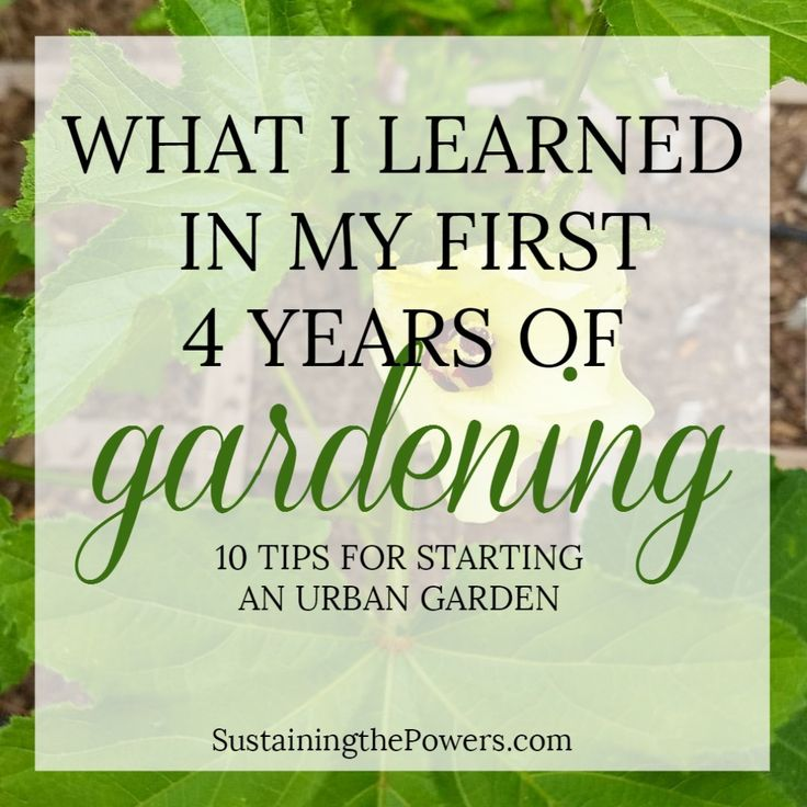 How To Start an Urban Garden | What I Learned My First 4 Years Gardening