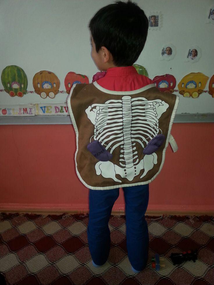 organlar ve iskelet