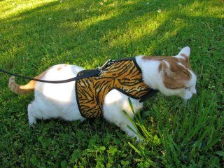 For Lucy: Cats who hate harnesses LOVE the Kitty Holster cat harness! Walk your cat!