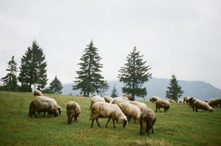 Босния и Герцеговина | Katya Alagich