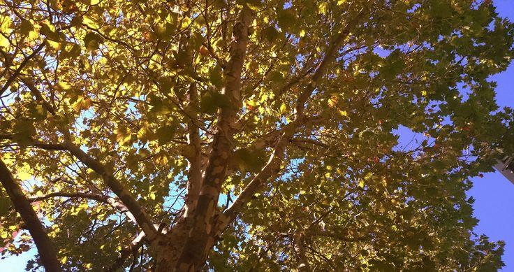 Autumn in Tasmania