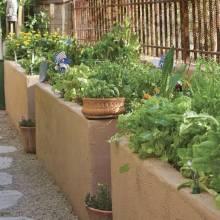 The Scented Garden - Phoenix Home & Garden nice plant list for Valley