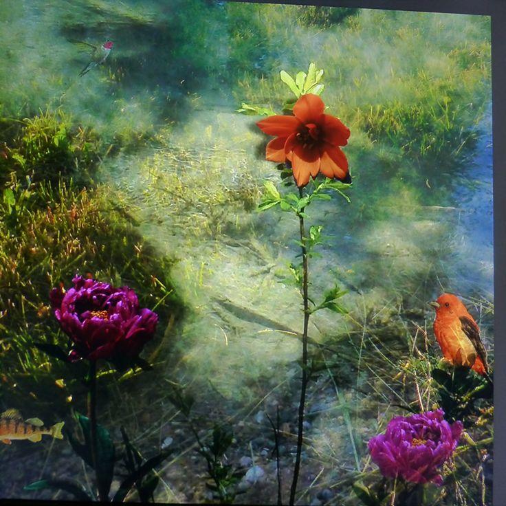 Digital, composite, floral, photos