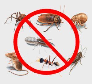 Pest #Control Story from #Bedford