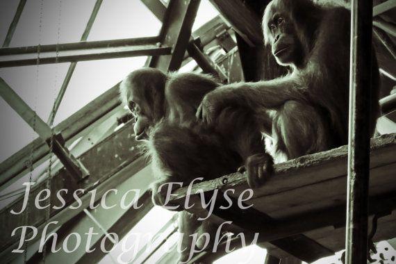 two orangutans sit together on a platform by jessicaelysephotos, $30.00