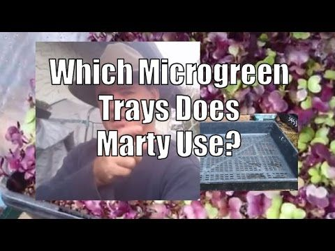 What Trays Do I Use To Grow Microgreens Successfully - YouTube