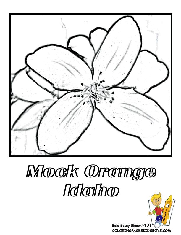 Idaho State Flower Coloring Page