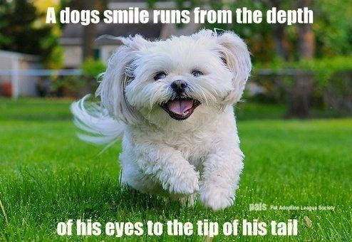 A dogs smile . . .