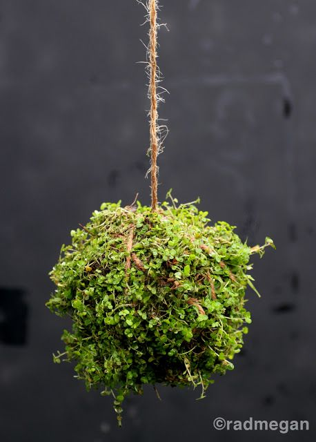 radmegan: in words and pictures: Inspired by Twitter: Making String Gardens  ECKMANN STUDIO BLOG