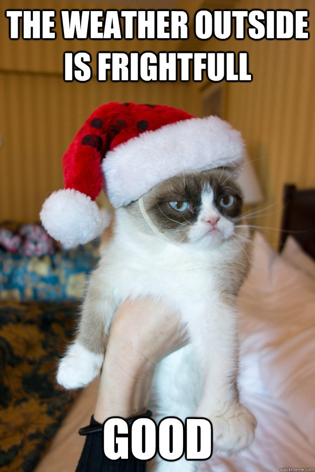 Grumpy Cat listens to Christmas music too