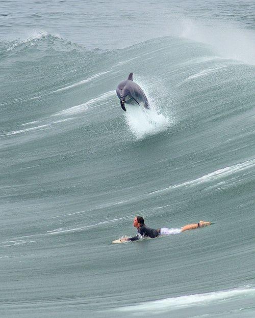 Dolphin 01