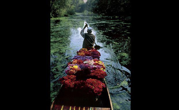 Na Caxemira, um vendedor de flores avança remando pelas águas calmas do lago Dal. Os tumultos civis destroçaram a tranquilidade da região e devastaram o setor de turismo. No passado, a região já chegou a receber mais de meio milhão de visitantes por ano.