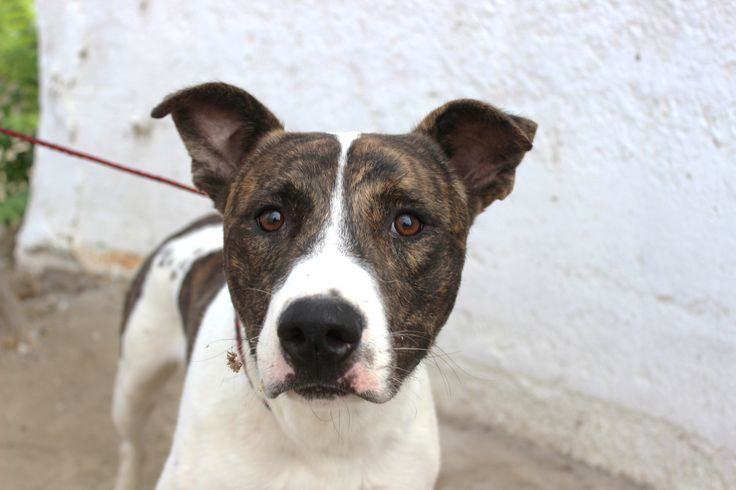 TONKA (07012015M-D04) located in Delano, CA has 1 day Left to Live. Adopt him now!