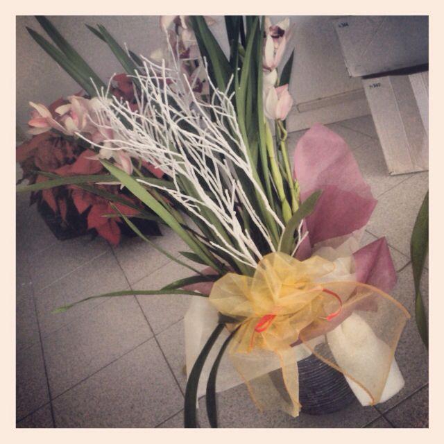 Pianta di orchidea, idea confezione regalo per #natale