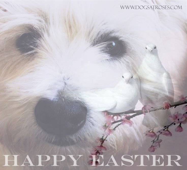 Happy Easter. #dogs #petaccessories #madeinitaly #fashion