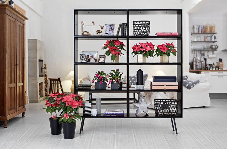 Neue Dimensionen schaffen: Das Raumteiler-Regal in schwarz wirkt kombiniert mit dem hellen Boden besonders schlicht und elegant. Pinke Poinsettien in goldenen Designtöpfen sorgen für eine festlich-moderne Note. #sfe #poinsettie #poinsettia #weihnachtsstern #christmas #weihnachten #Raumteiler