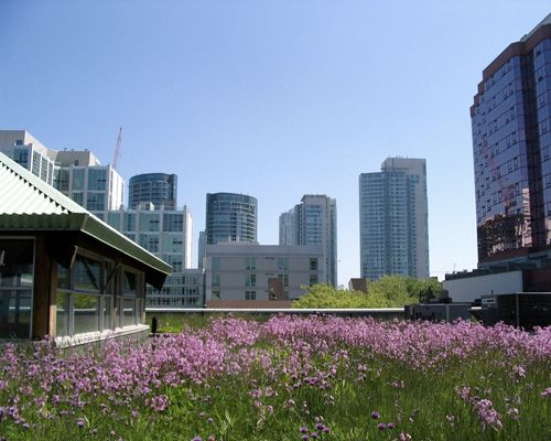 A green roof looks even nicer in contrast with a cityscape!
