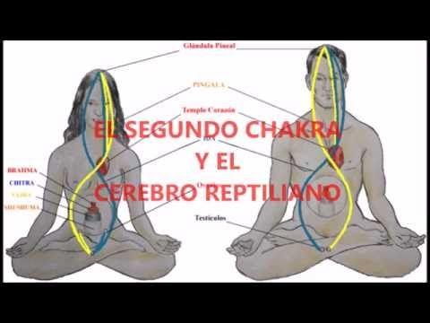 LO QUE OCULTA EL SEXO SAGRADO. SEGUNDO CHAKRA, KUNDALINI Y SU RELACIÓN CON EL CEREBRO REPTILIANO - YouTube