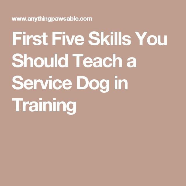First Five Skills You Should Teach a Service Dog in Training