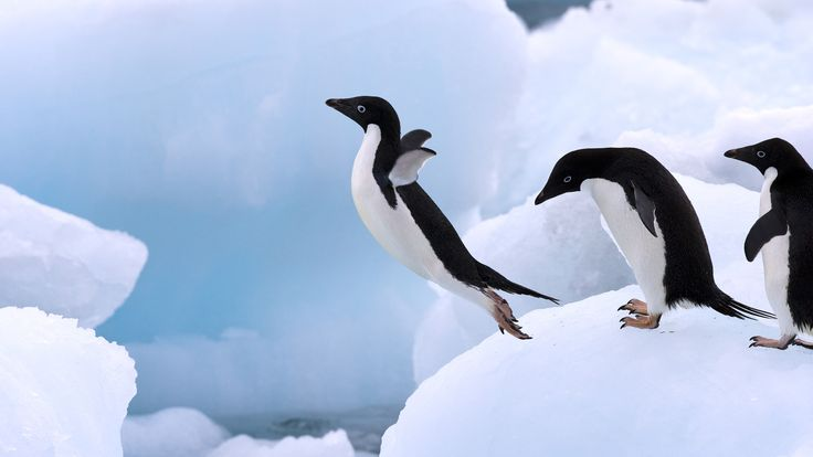 30 Facts to Know about Penguins-Impressive Magazine