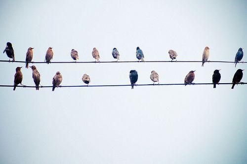 Birdies.: Life, Inspiration, Wire, Birdi, Feathers, Birds, Photography, Beautiful Things, Animal