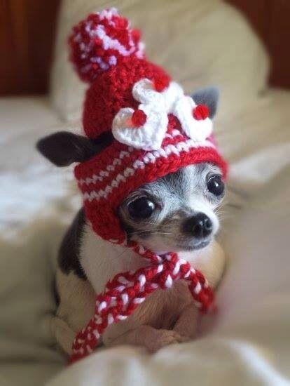 i wanna a mini dawg