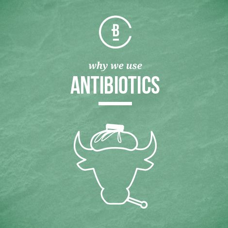 Learn why antibiotics are used to treat cattle.