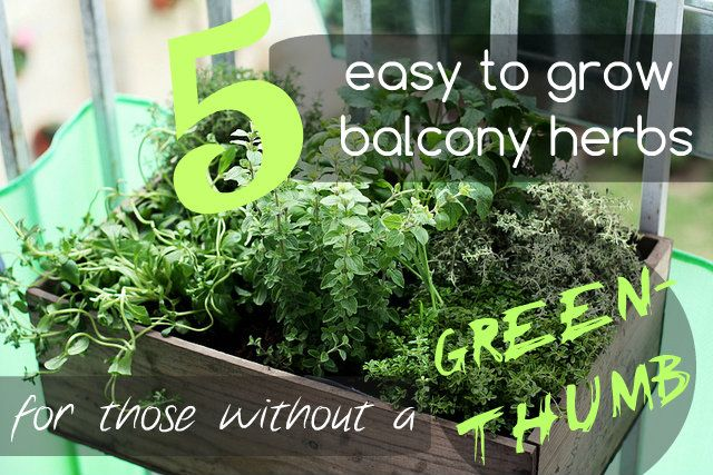 Here are 5 easy to grow balcony herbs for those without a green-thumb - The Urban Ecolife | The Urban Ecolife