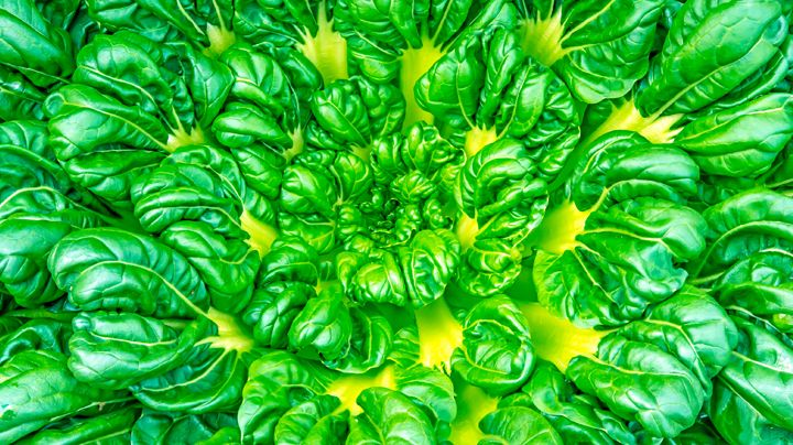 Tatsoi is een Aziatische groente. Ze produceert blaadjes die rond en stevig zijn. Ze is familie van de kruisbloemigen en is – in tegenstelling tot wat je zou denken – geen bladgroente maar een kool. Je zaait tatsoi in augustus en september om net voor de winter te oogsten. Ze is matig winterhard, maar overleeft…
