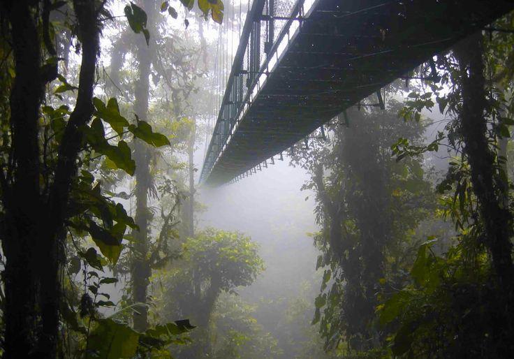 Rainforest Walkway 2017