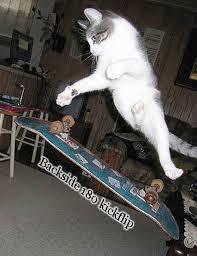 skateboarding memes - Google Search