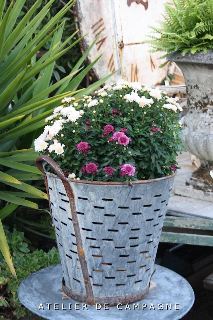 33 best Olive buckets images on Pinterest | Olive bucket, Galvanized ...