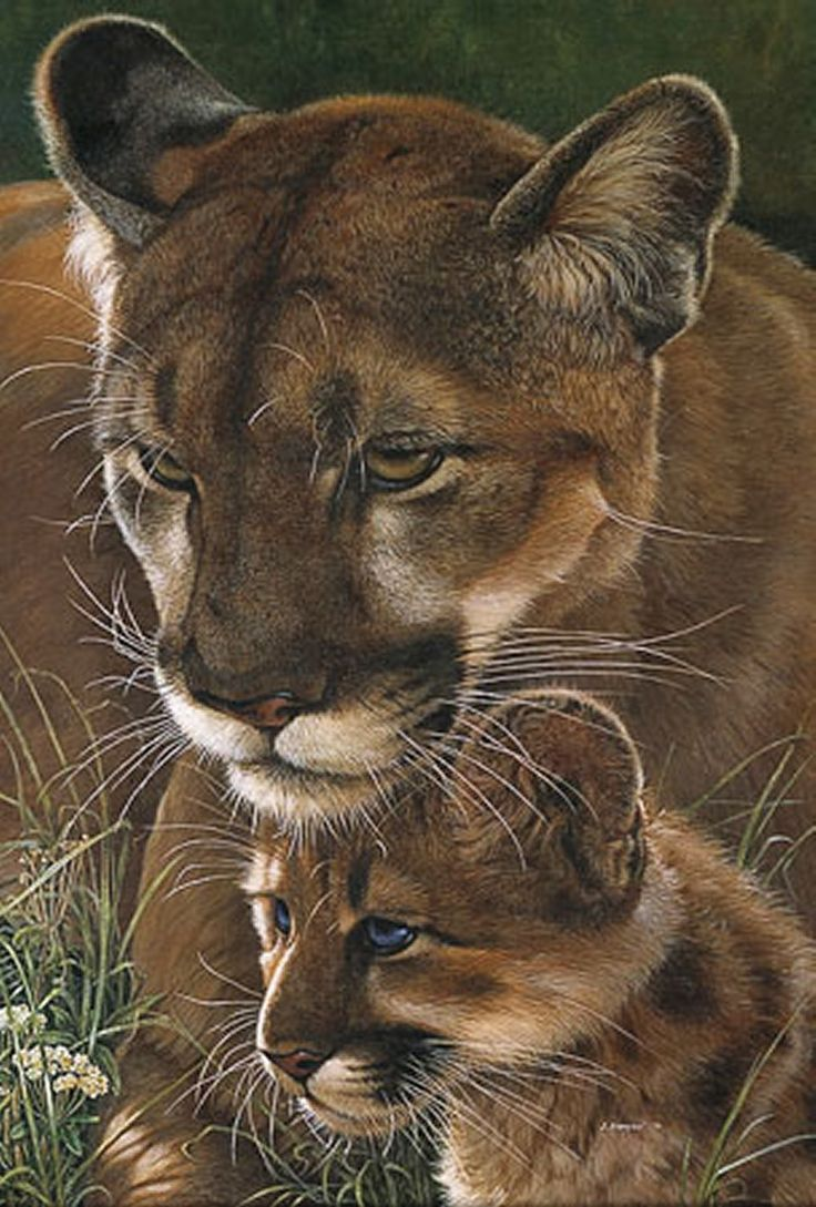 686 best lions, tigers, big cats images on pinterest | wild