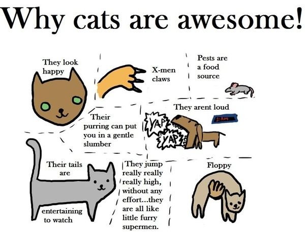 Cats are awesome