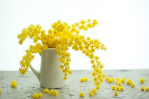 mimosa wreath | mimosa wreath | mellow-stuff mie | Flickr