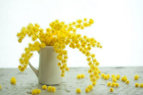 mimosa wreath | mimosa wreath | mellow-stuff mie | Flickr