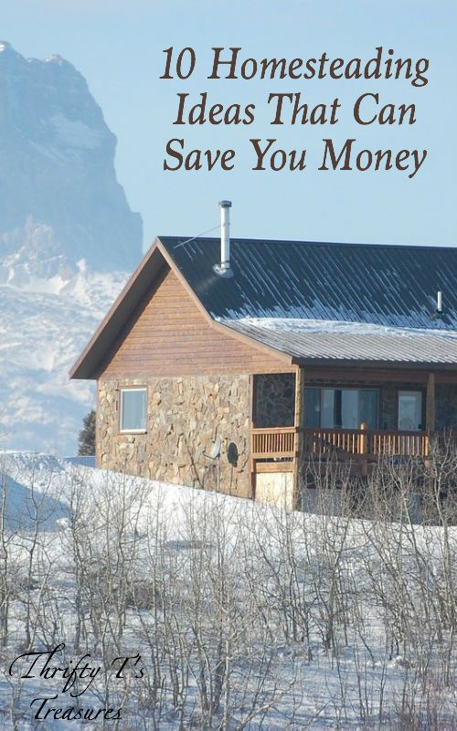 10 homesteading ideas that can save you money buckets