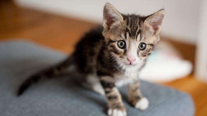 Unique Cat Names Guides, Cat Names