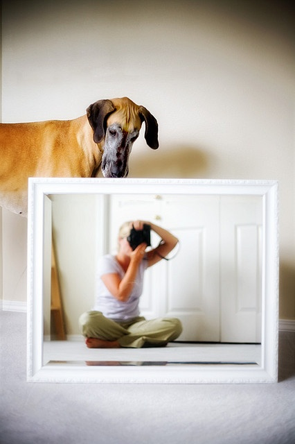 As a mommy of a Great Dane, I just love this.