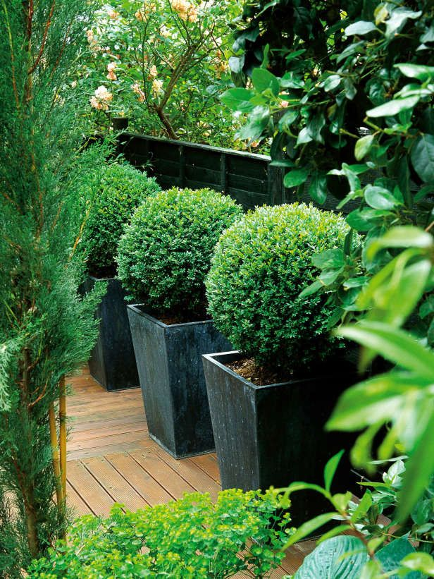 Clipped Boxwoods Featured in Metal Pots --> http://www.hgtvgardens.com/photos/gardens-photos/pot-pourri-garden-pots-and-container-gardens?soc=pinterest