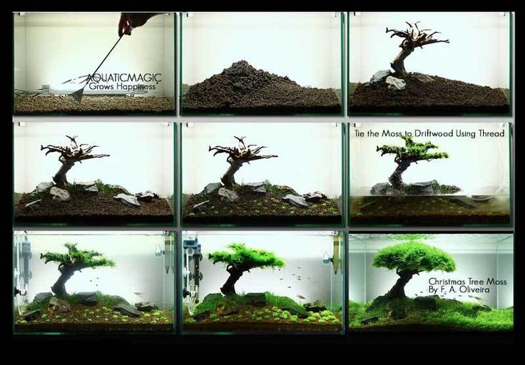 Xmas Moss-live Aquarium Plant Decoration Package Co2 Flame