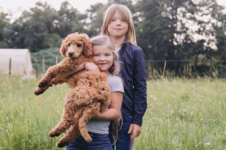FAMILIENBANDE #geblitztdings.de#geblitzdings#geschwister#mädchen#girl#langenhagen#ampferdemarkt#fotostudio#familie#baby#newborn#hochzeiten#fuhrberg#isernhagen#hannover#liebe#studiofotografie#Kitafotografie#kita#Kindergarten#pudel#lockenkopf#lachen#outdoor#krähenwinkel#janne# spaß#fun#outdoor# Geschwister#geschwisterliebe#bruder#schwester# Noch mehr Fotos und Galerien über Newborn Baby und Familie unter www.geblitztdings.de