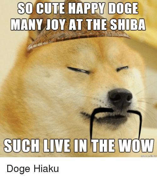 Love Each Other When Two Souls: Best 25+ Doge Meme Ideas On Pinterest