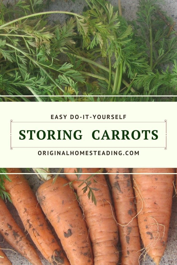 Learn about storing carrots in peat moss, wood shavings and river sand. Super easy ways to save your carrots for winter use!!!