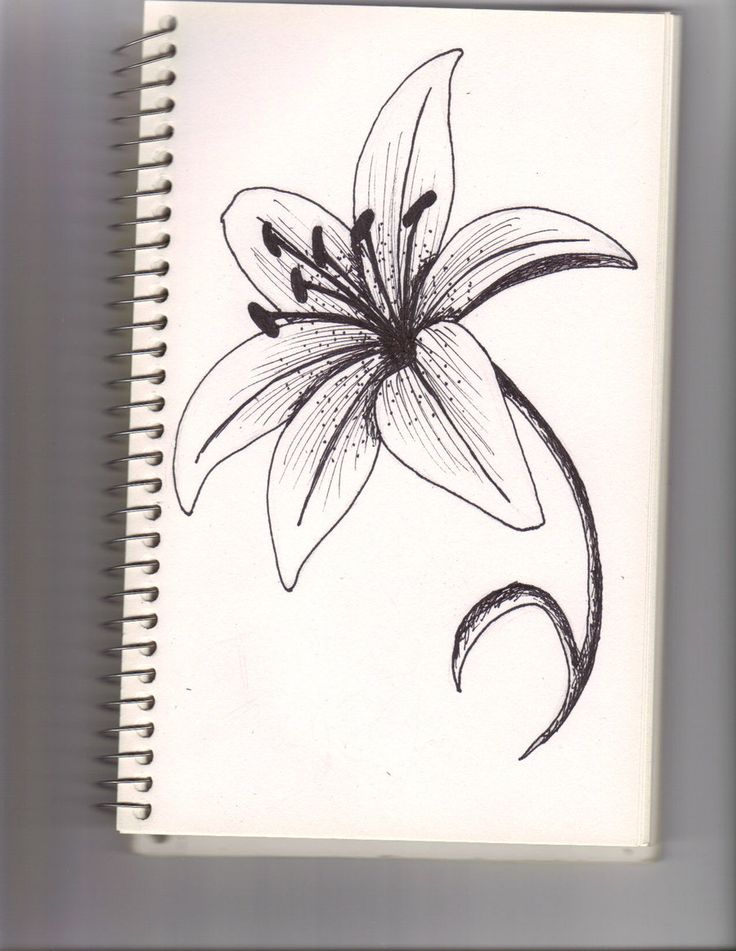 Best 20 white lily flower ideas on pinterest for Easiest flower to draw