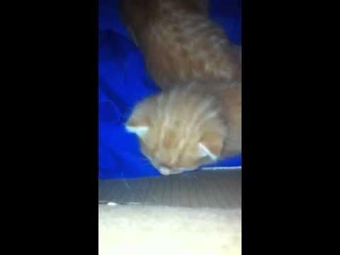 Meget søde katte killinger