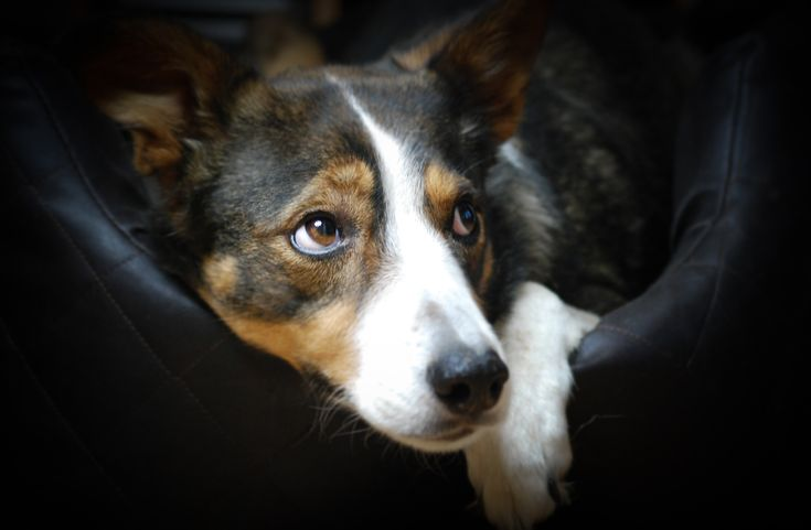 Fern, 11 year old Border Collie. Taken by Sophia Perkins.