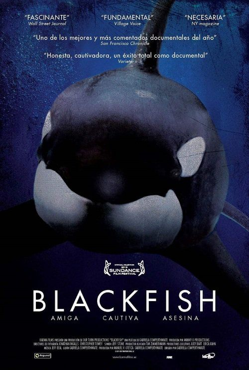 (LINKed!) Blackfish Full-Movie | Download  Free Movie | Stream Blackfish Full Movie HD Movies | Blackfish Full Online Movie HD | Watch Free Full Movies Online HD  | Blackfish Full HD Movie Free Online  | #Blackfish #FullMovie #movie #film Blackfish  Full Movie HD Movies - Blackfish Full Movie