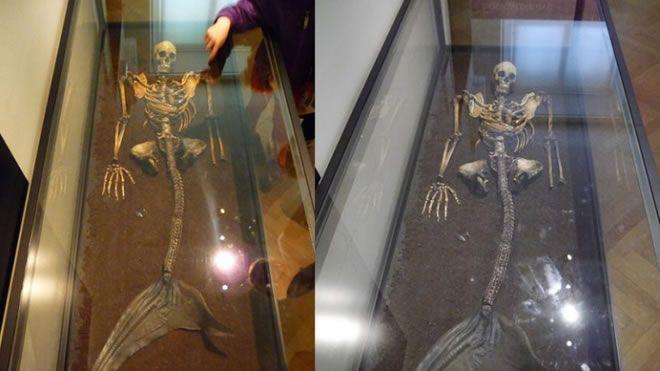 Hallan esqueletos de sirena