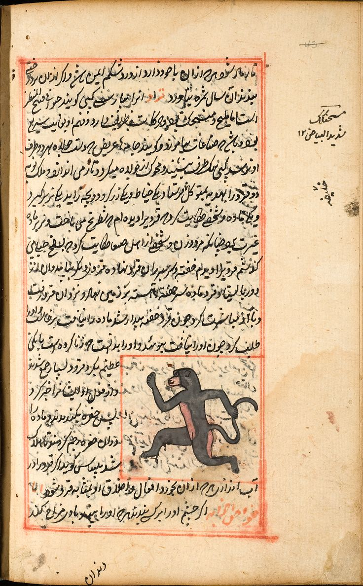 Baboon - Zakarīyā ibn Muḥammad al-Qazwīnī: 'Ajā'ib al-makhlūqāt wa-gharā'ib al-mawjūdāt (Marvels of Things Created and Miraculous Aspects of Things Existing)